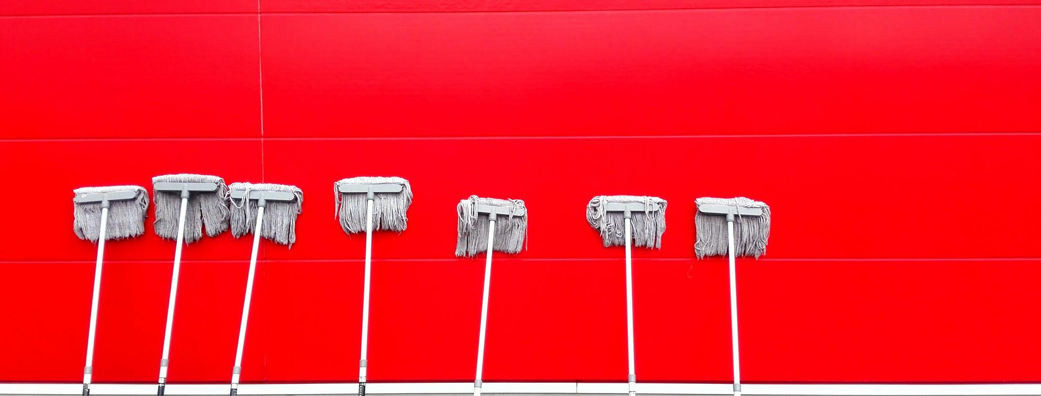 Mops against red wall
